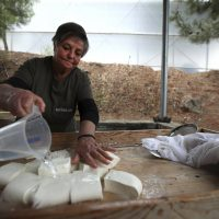 Cyprus' halloumi cheese entangled in politics